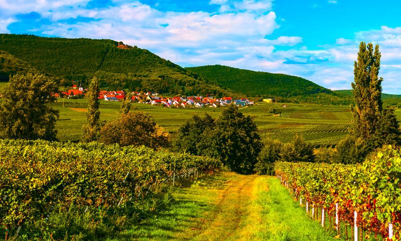Ebenso wie den Weinort Burrweiler, finden Sie umgeben von Weinbergen, unser Gästehaus.
